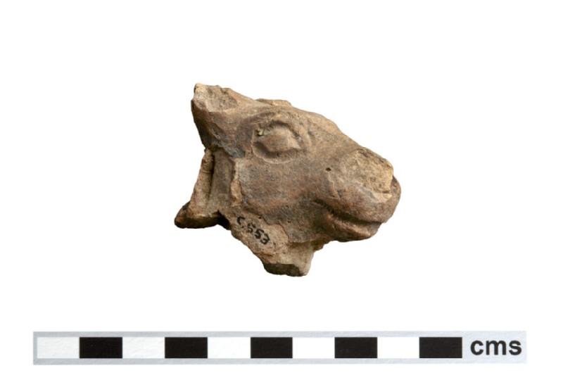 Bull or calf head