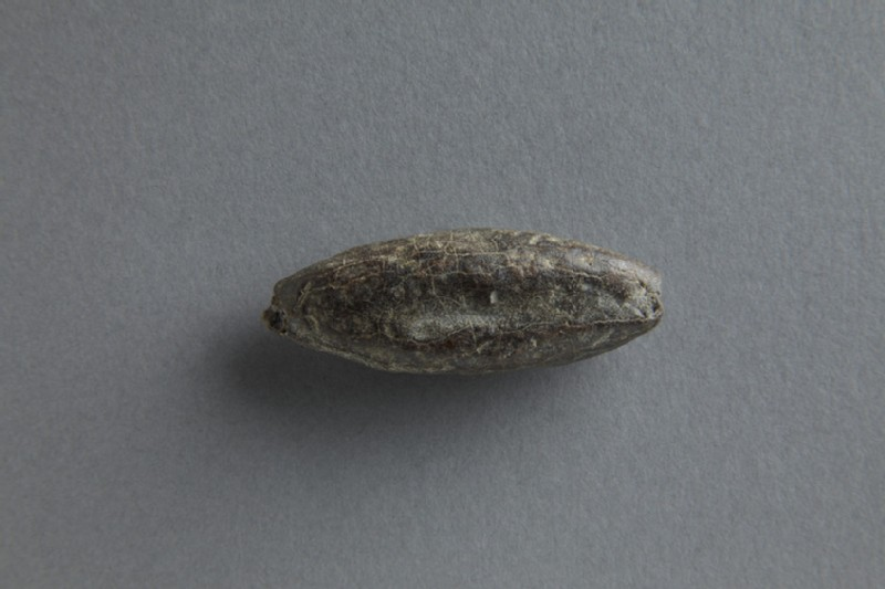 Sling bullet (ANFortnum.V.245)