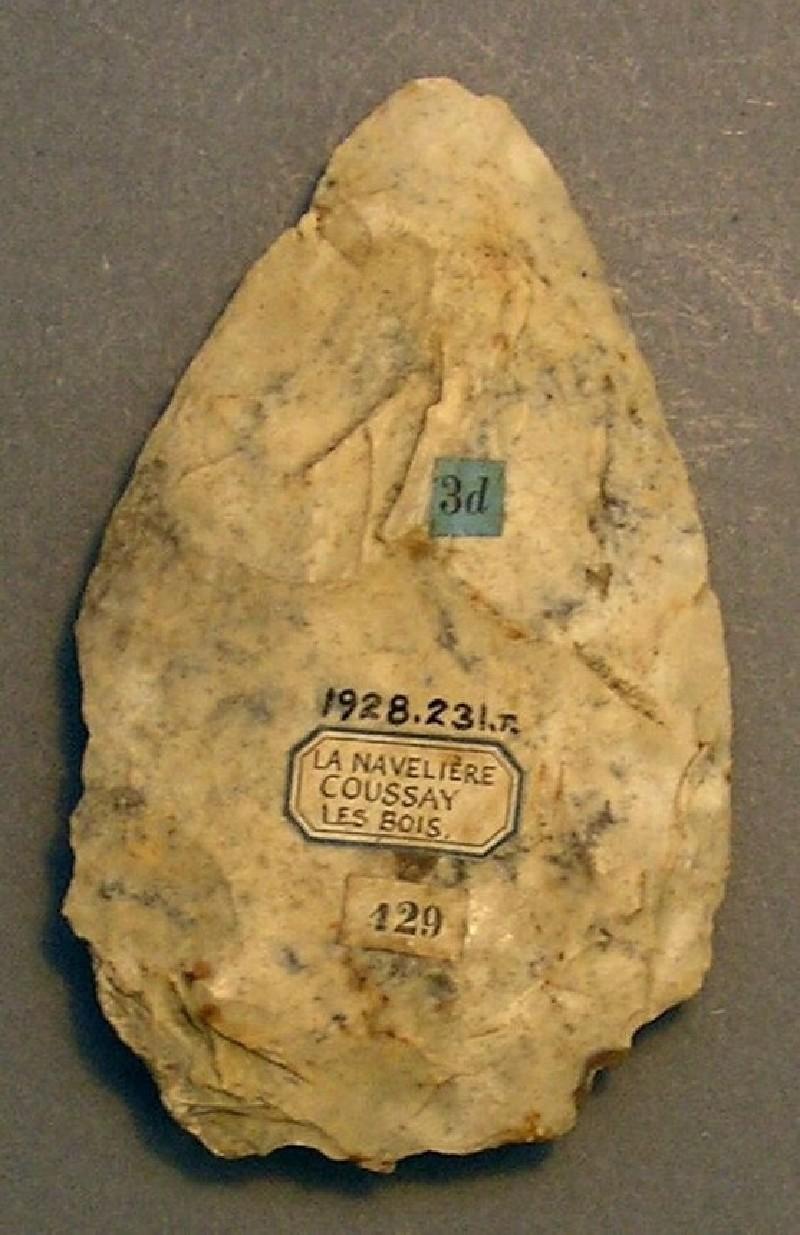 (AN1928.231.n, record shot)
