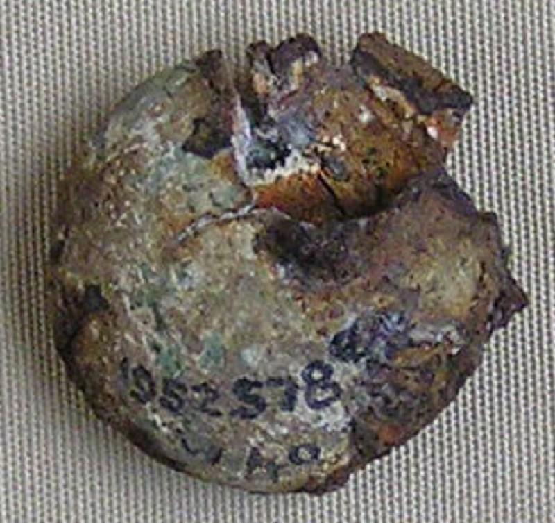 Bronze nail head (AN1952.578.e, record shot)