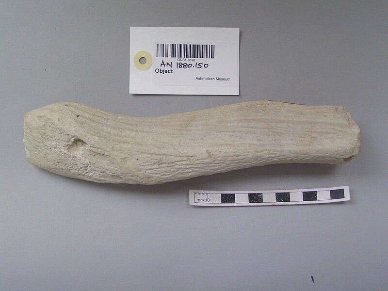 Fragment of worked antler (AN1880.150, record shot)