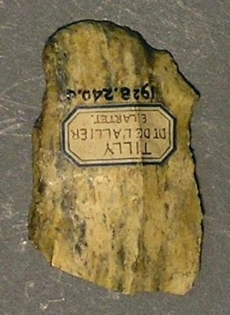 (AN1928.240.a, record shot)