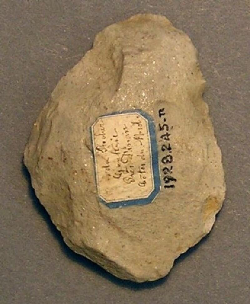 (AN1928.245.n, record shot)