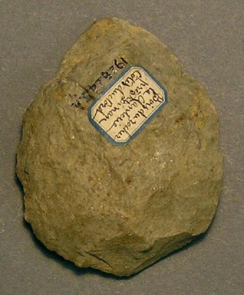 (AN1928.245.h, record shot)