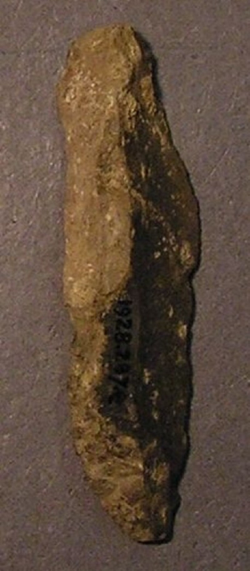 (AN1928.287.e, record shot)