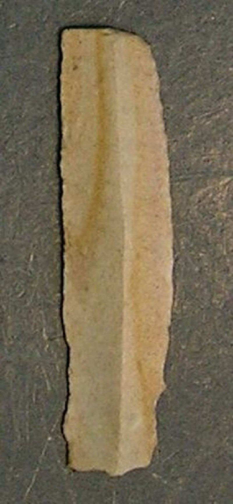 (AN1928.294.j, record shot)