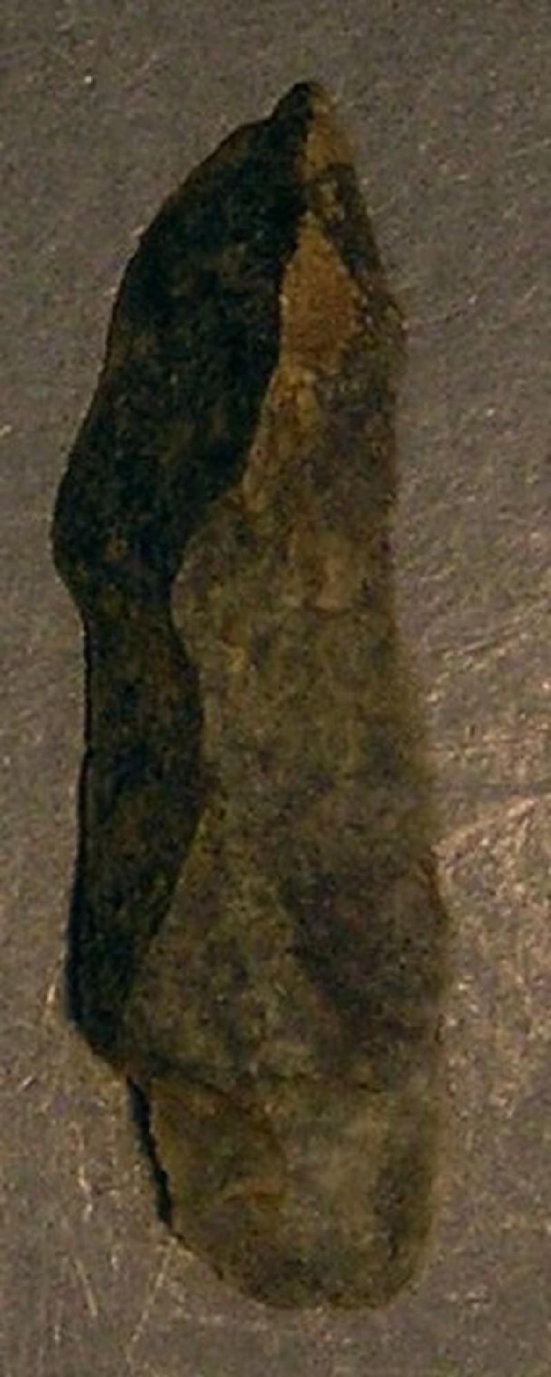 (AN1928.295.l, record shot)