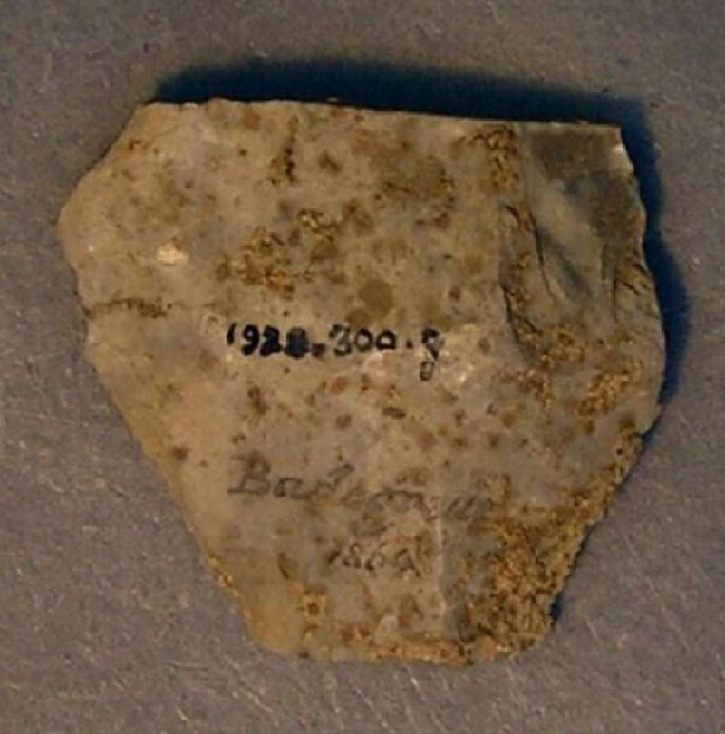(AN1928.300.g, record shot)