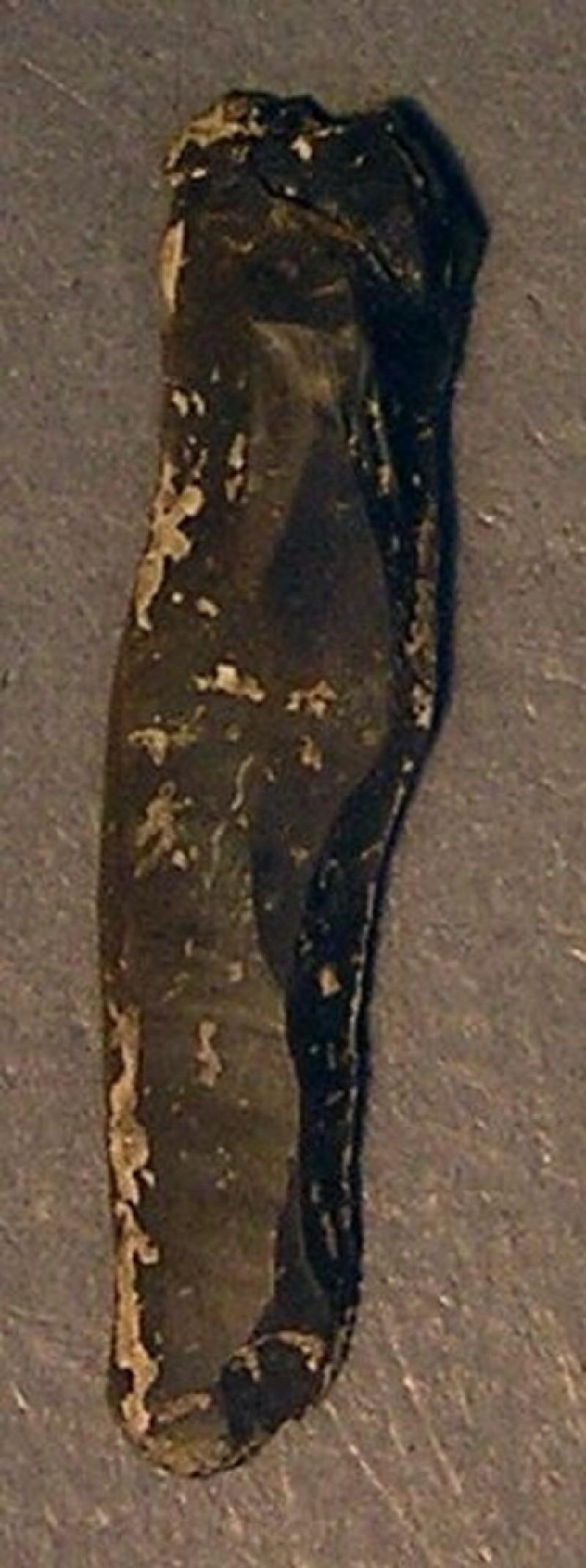 (AN1928.286.e, record shot)