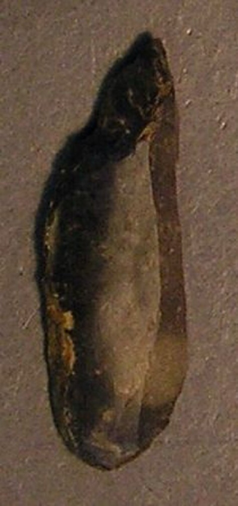 (AN1928.283.l, record shot)