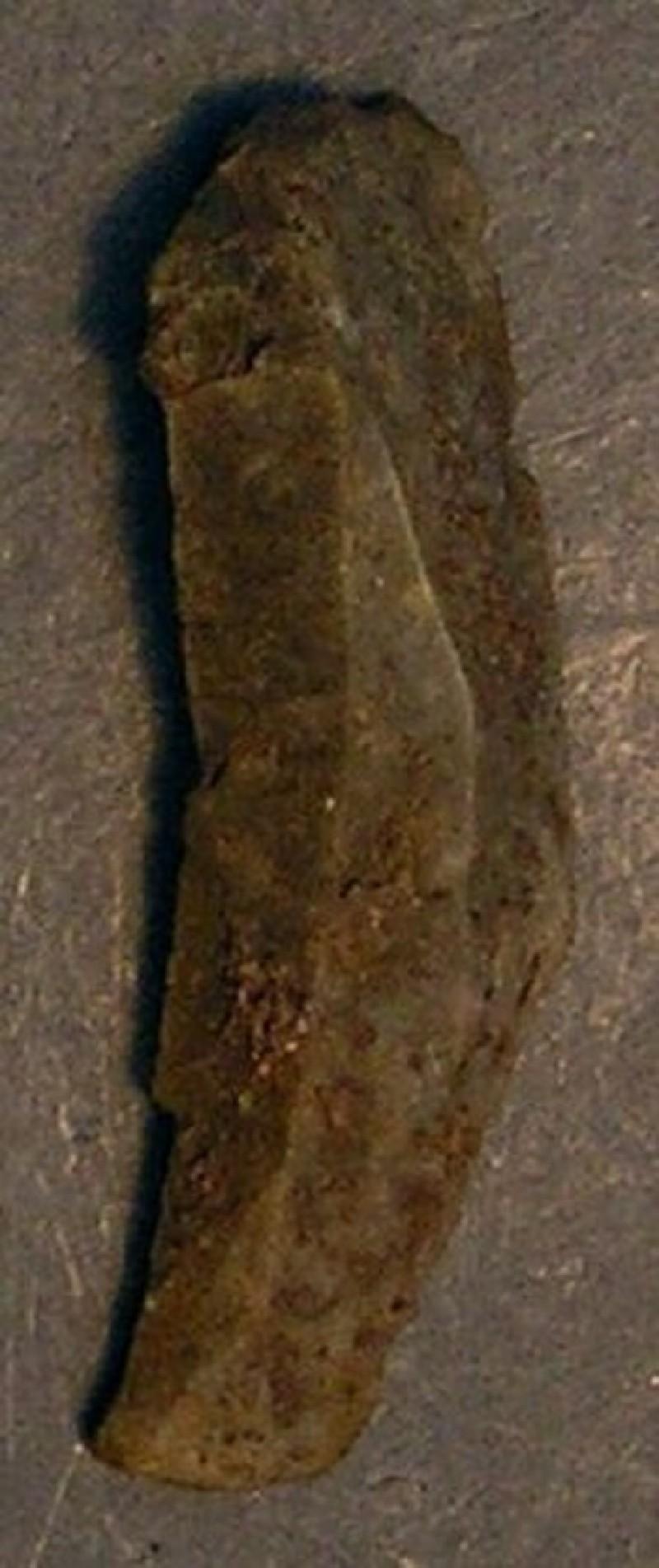 (AN1928.295.g, record shot)