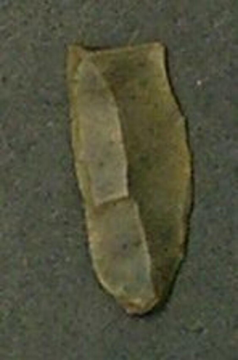 (AN1942.30.d, record shot)