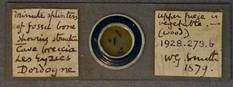 (AN1928.273.b, record shot)
