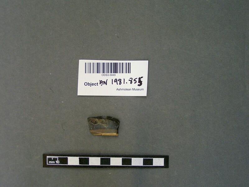 (AN1981.855, record shot)