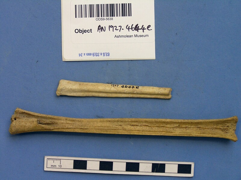 Worked bone implements (AN1927.4644.e, record shot)