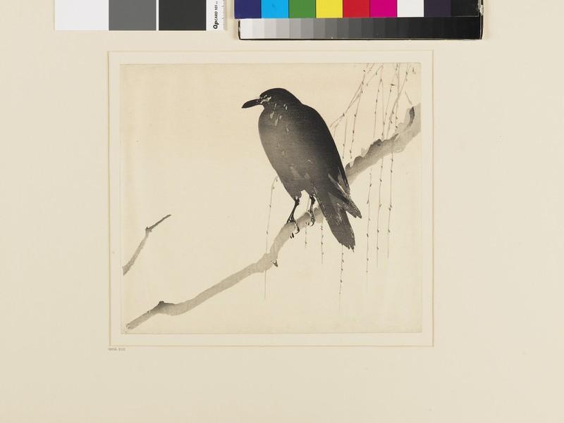 Crow (EA1958.222, front            )