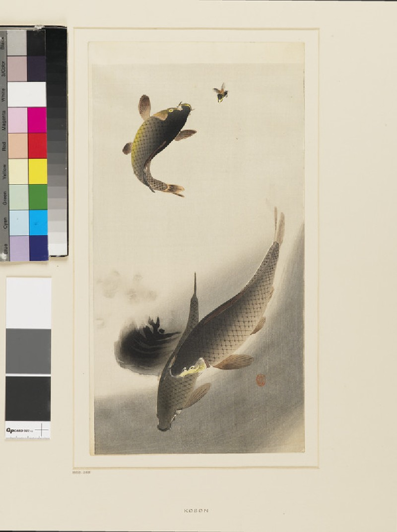 Three carp, one jumping for a fly (front            )