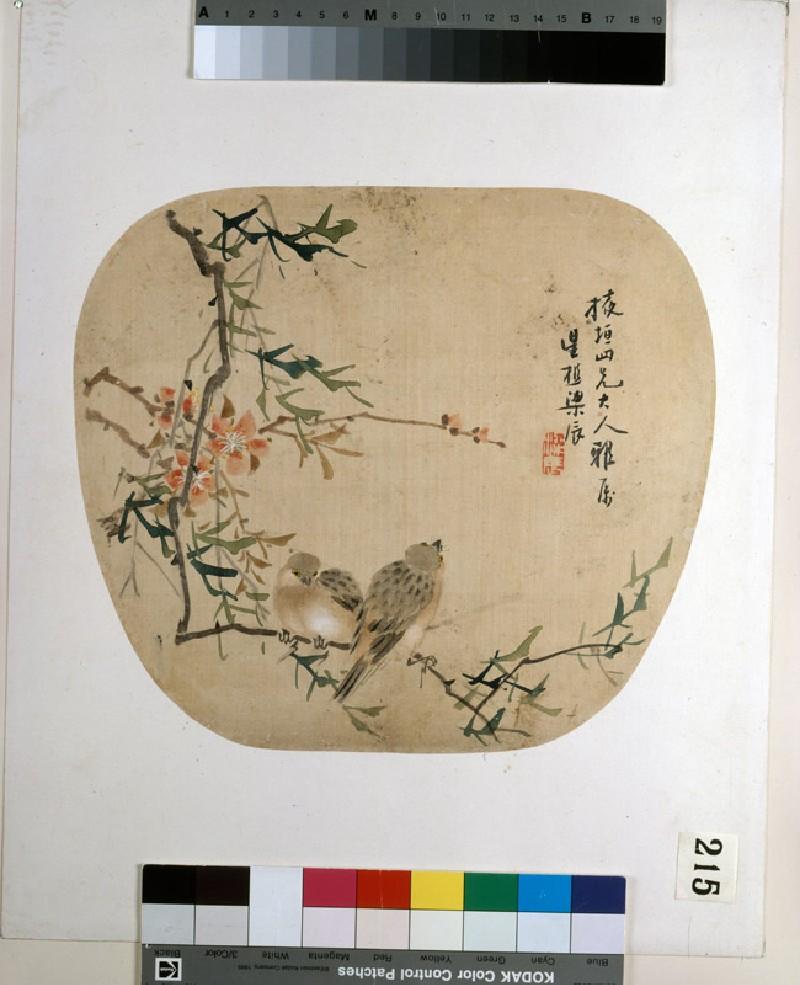 Birds on a flowering branch