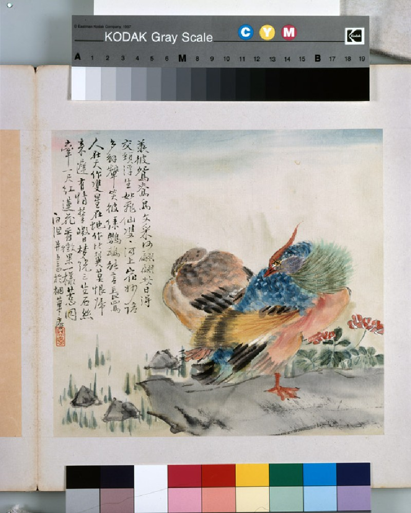 A pair of Mandarin ducks (EA1964.221.f, front              )