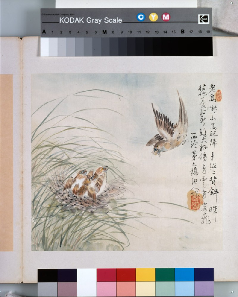 A bird carrying food in its mouth (EA1964.221.g, front              )