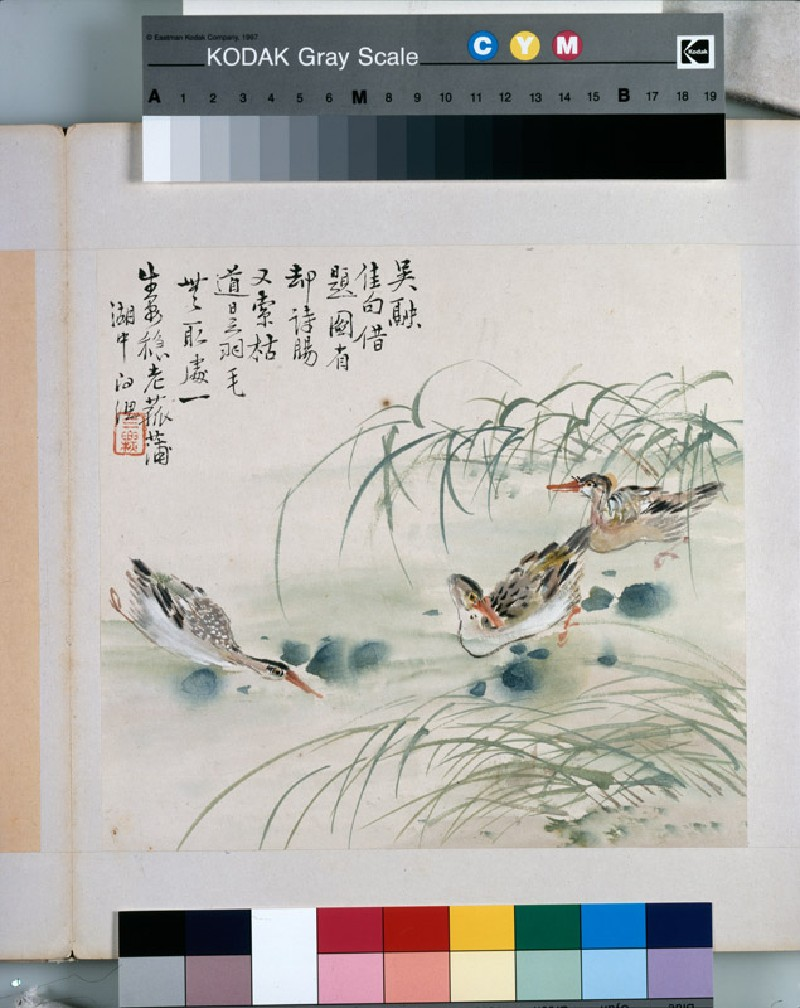 Three ducks swimming in a pool (EA1964.221.h, front              )