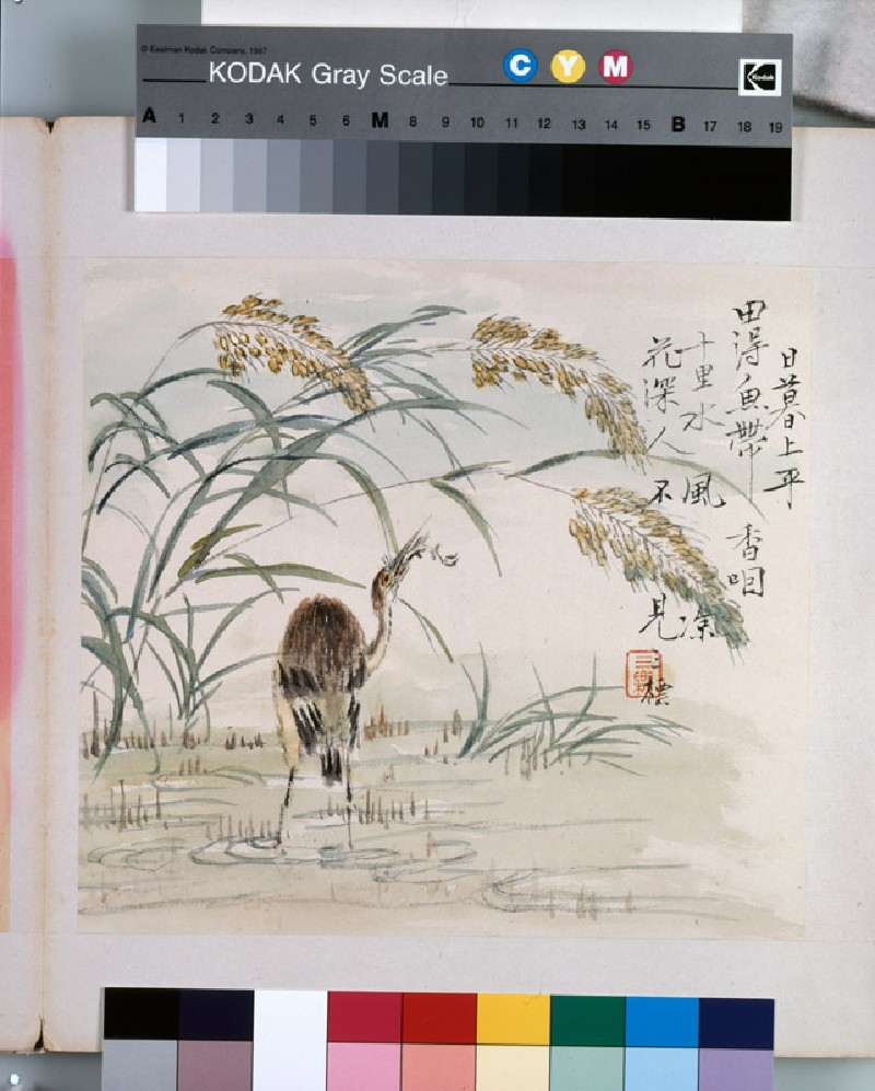 An egret eating a fish (EA1964.221.j, front              )