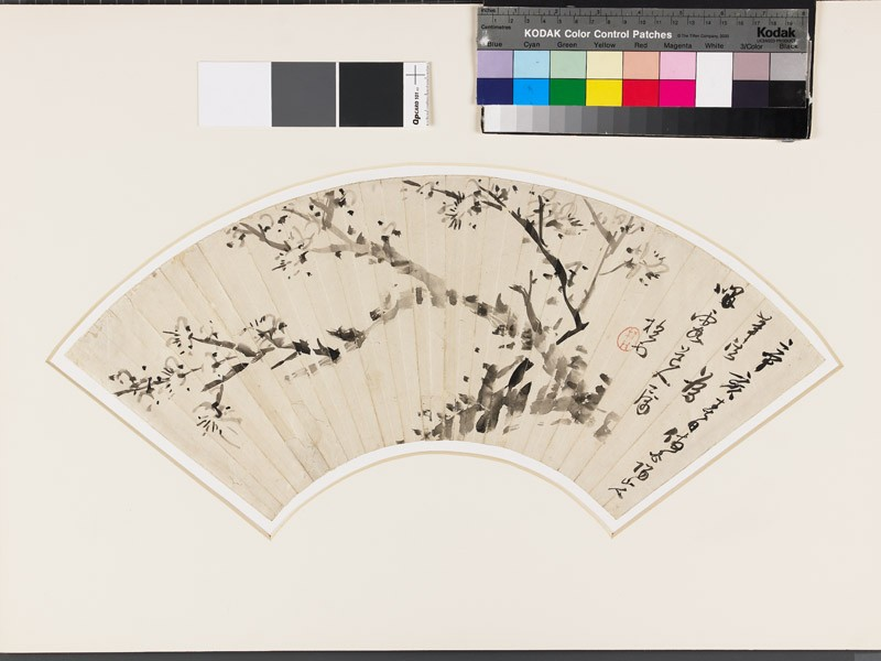Blossoming plum tree (EA1966.100, front            )