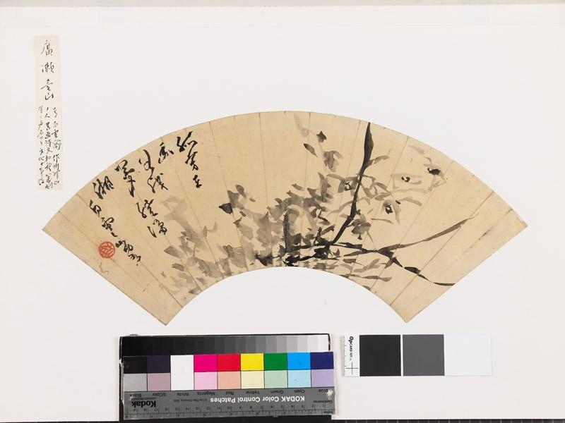 Epidendrum (EA1966.106, front            )