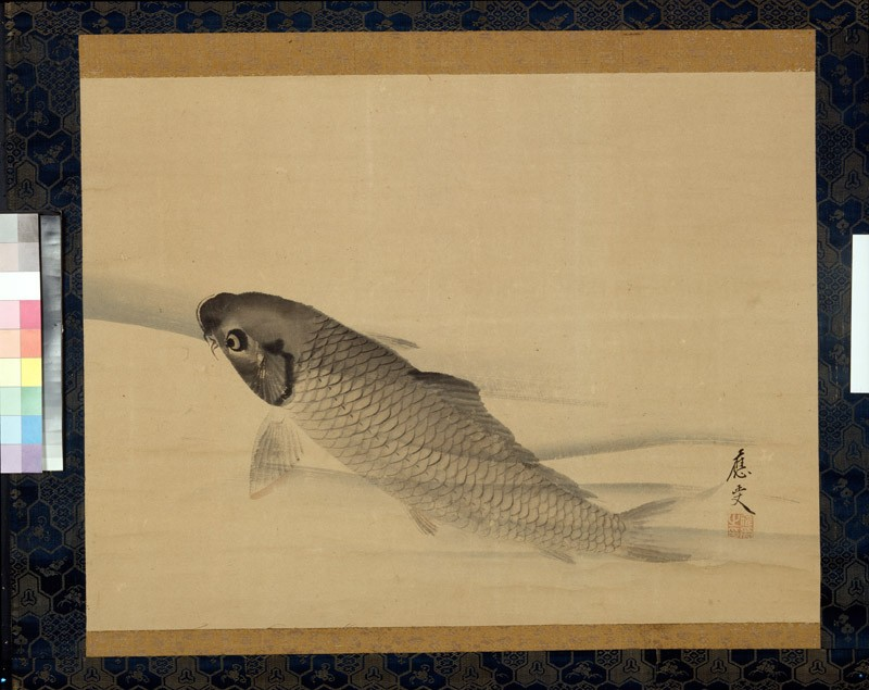 Carp swimming in clear water