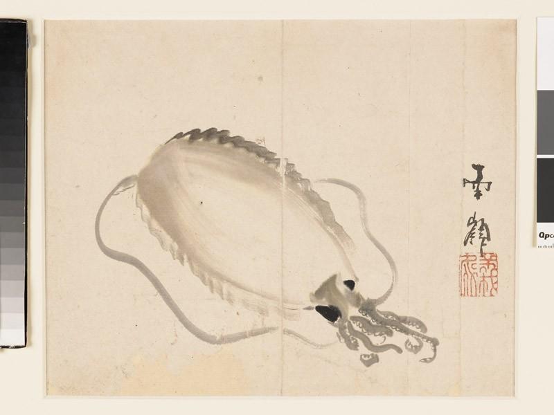 Squid (front           )