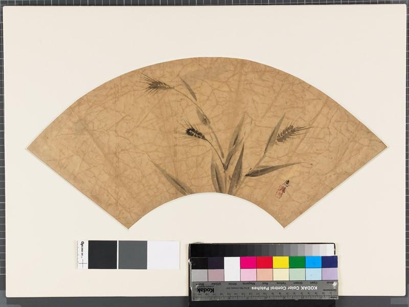 Rice plants (EA1973.93, front           )