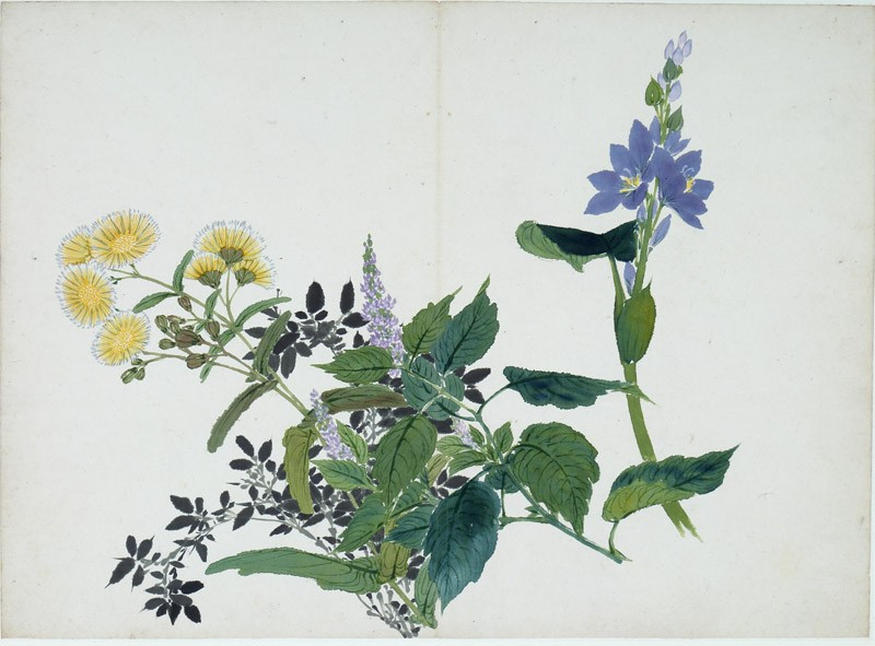 Yellow and purple flowers (EA1995.236.m, front              )