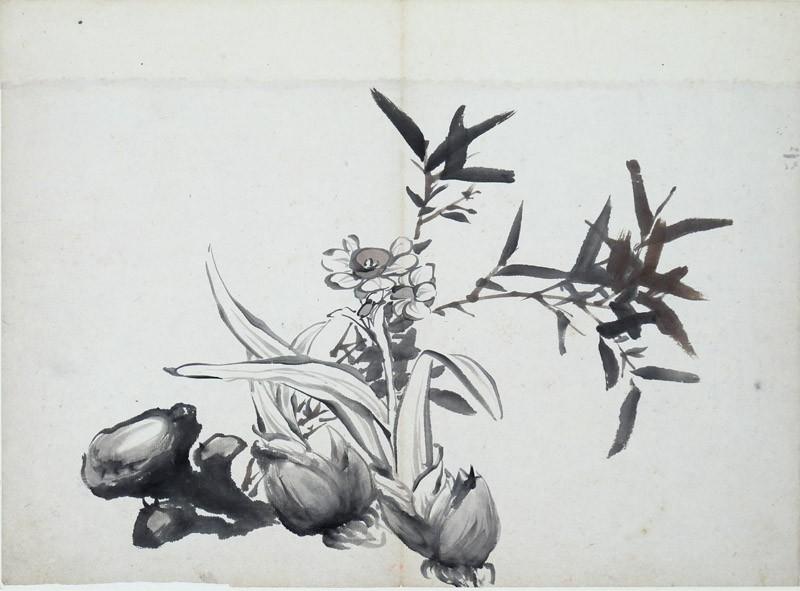 Narcissus, garlic, and fungi