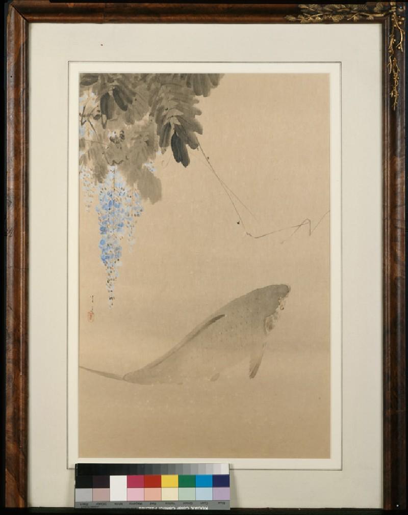 Carp and wisteria (EA1996.130, front            )