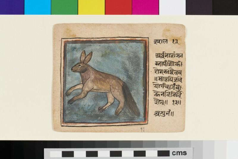 Hare (EA2012.344.a, recto)