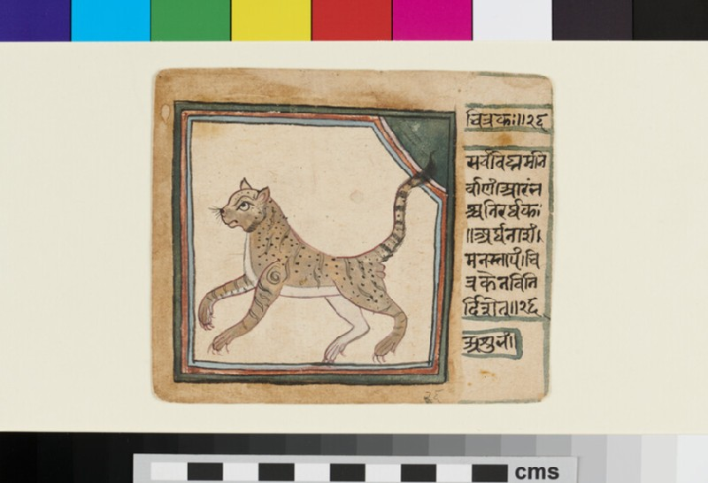 Leopard (EA2012.344.n, recto)