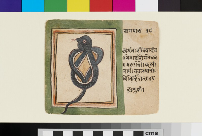 Coiled snake (EA2012.344.o, recto)