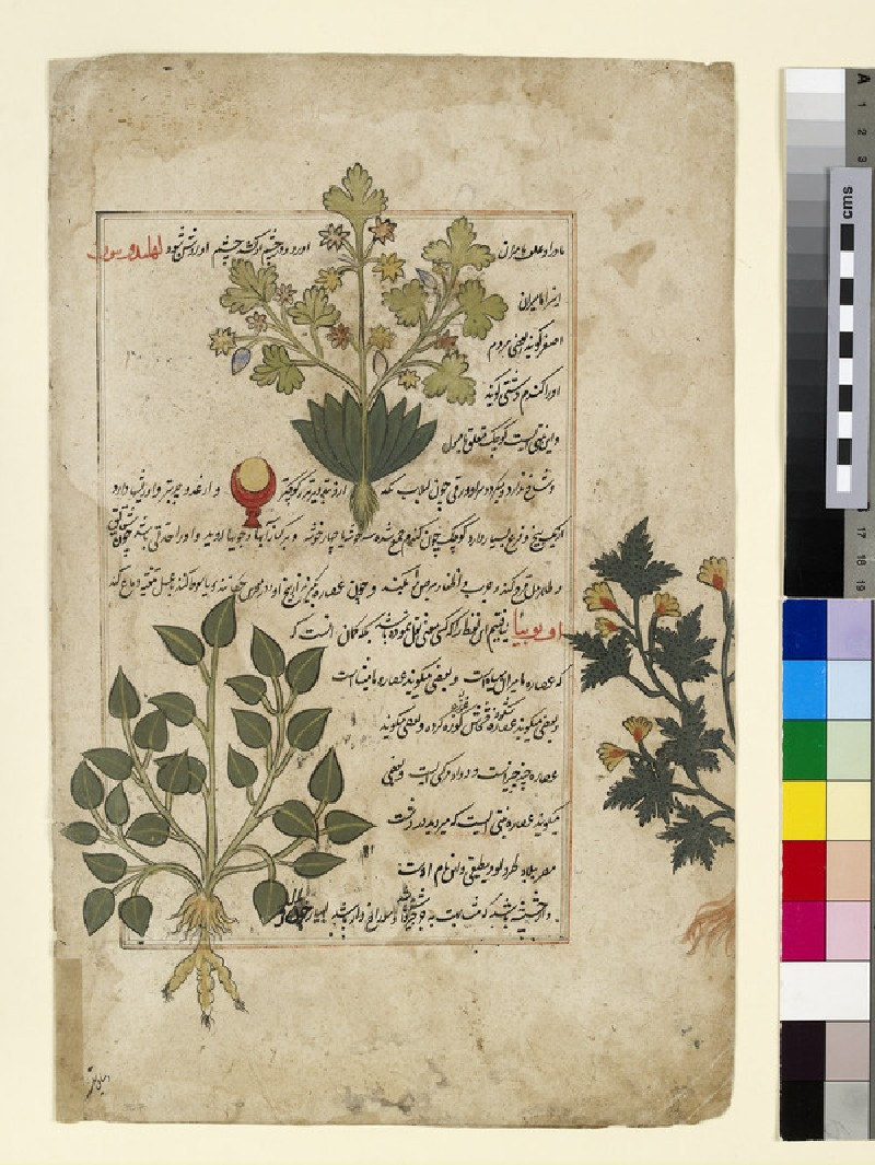 Illustrated double folio depicting thistles and other medicinal plants