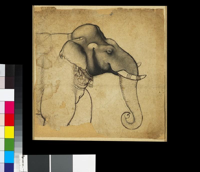 Head of an elephant (EA2016.23)