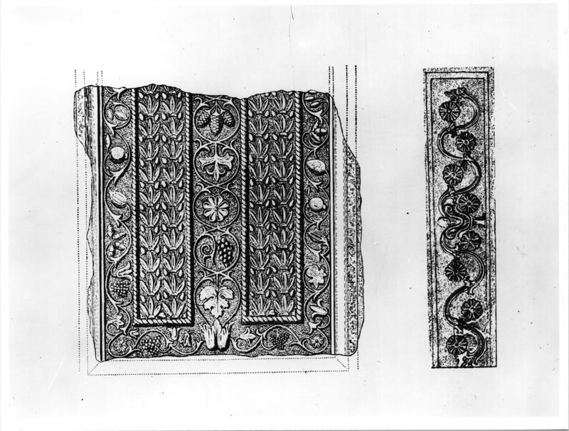 Nicophoriah sarcophagus