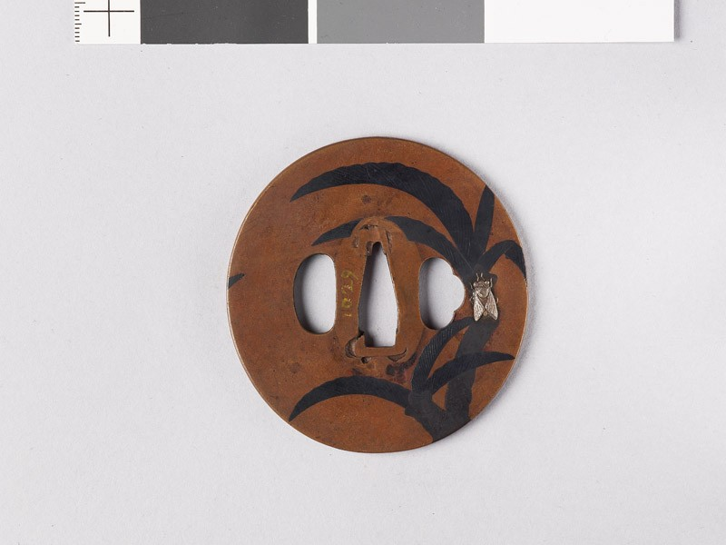 Tsuba with palms and a cicada (EAX.11139, front           )