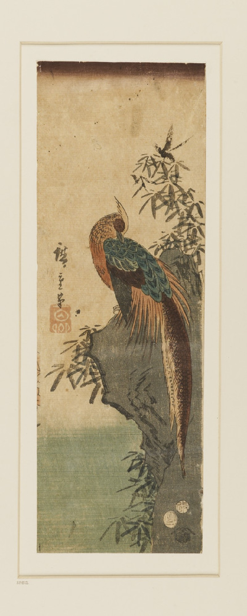 Golden pheasant on a rock (EAX.4397, front          )