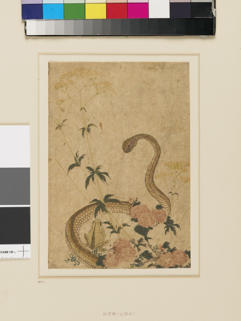 Snake threatening a frog amid peonies and a yellow flower