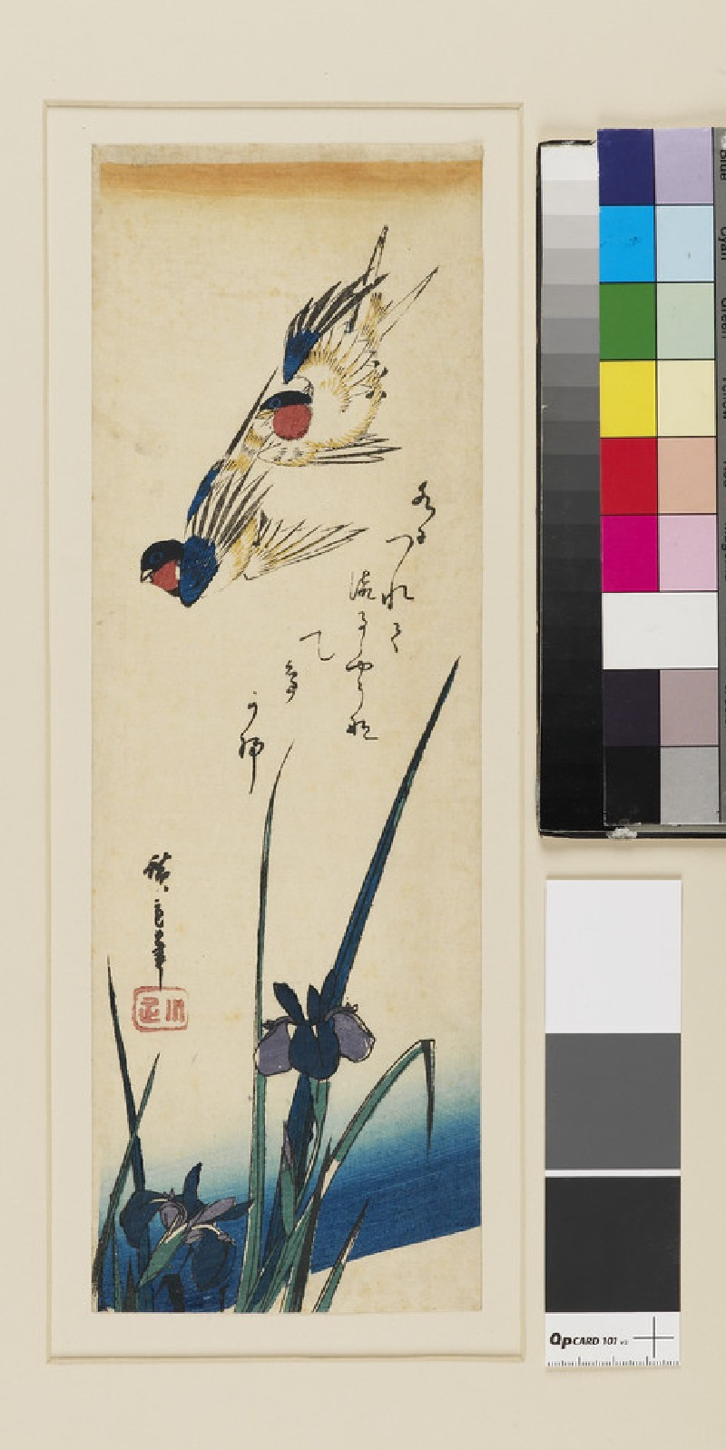 Two swallows flying over irises