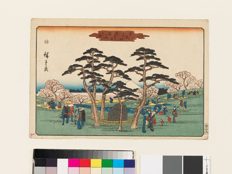 Cherry Trees in Full Bloom at Mount Asuka (EAX.4704, front          )