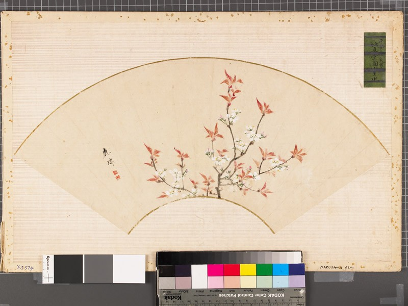 Cherry blossoms (EAX.5374, front          )