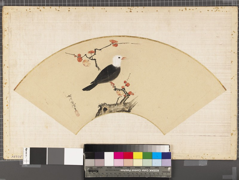 Black and white bird on a plum branch (EAX.5375, front          )