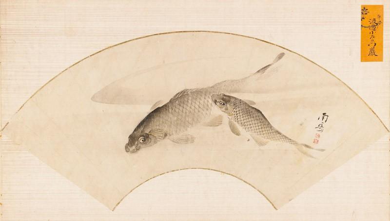 Two carp swimming in a pool