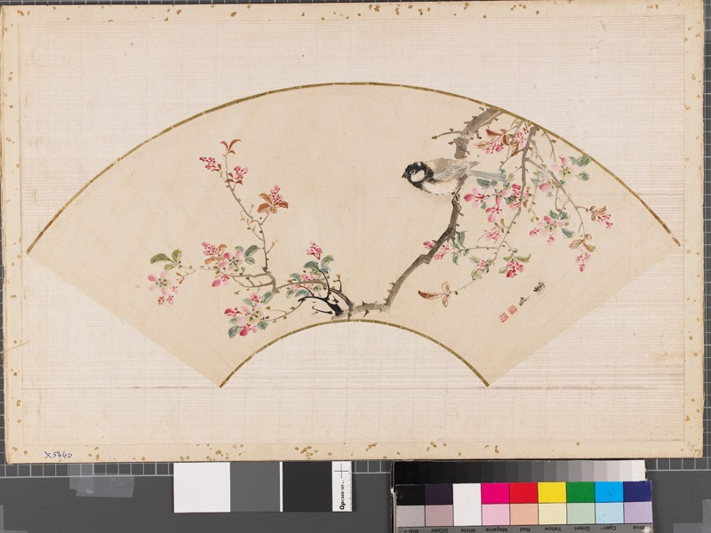 Bird on a flowering cherry tree (EAX.5440, front          )