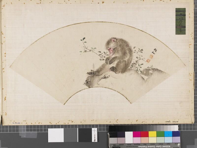 Monkey by a shrub (EAX.5450, front          )